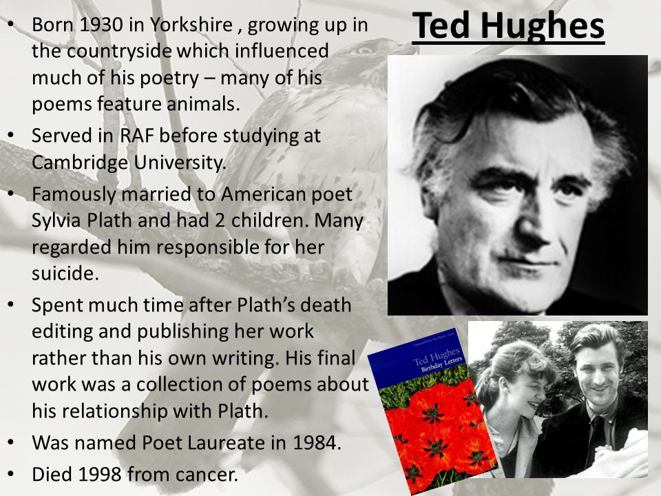 Ted Hughes Born 1930 in Yorkshire , growing up in the countryside which influenced much of his poetry – many of his poems feature animals.