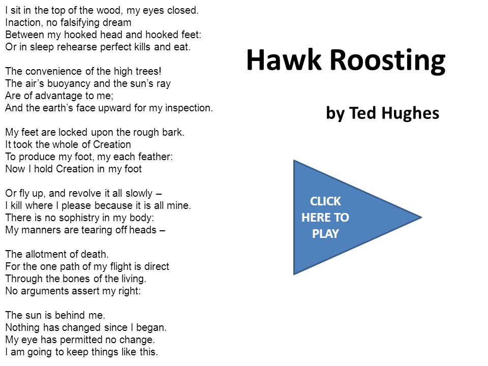 Hawk Roosting by Ted Hughes CLICK HERE TO PLAY