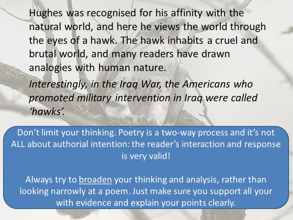 Hughes was recognised for his affinity with the natural world, and here he views the world through the eyes of a hawk. The hawk inhabits a cruel and brutal world, and many readers have drawn analogies with human nature. Interestingly, in the Iraq War, the Americans who promoted military intervention in Iraq were called 'hawks'.