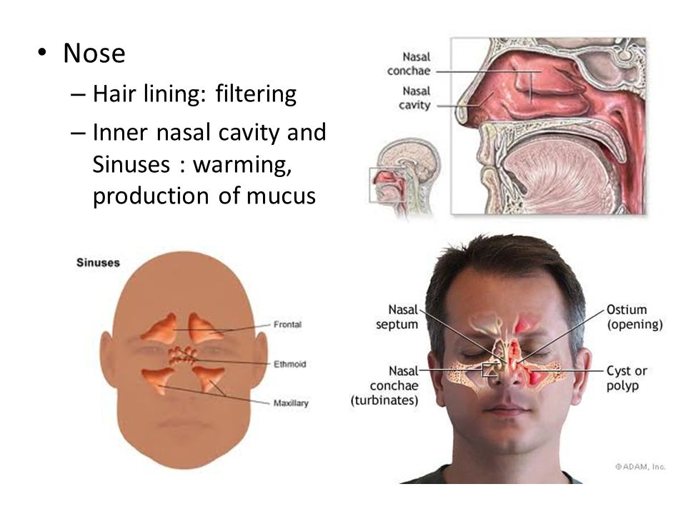 Nose Hair lining: filtering