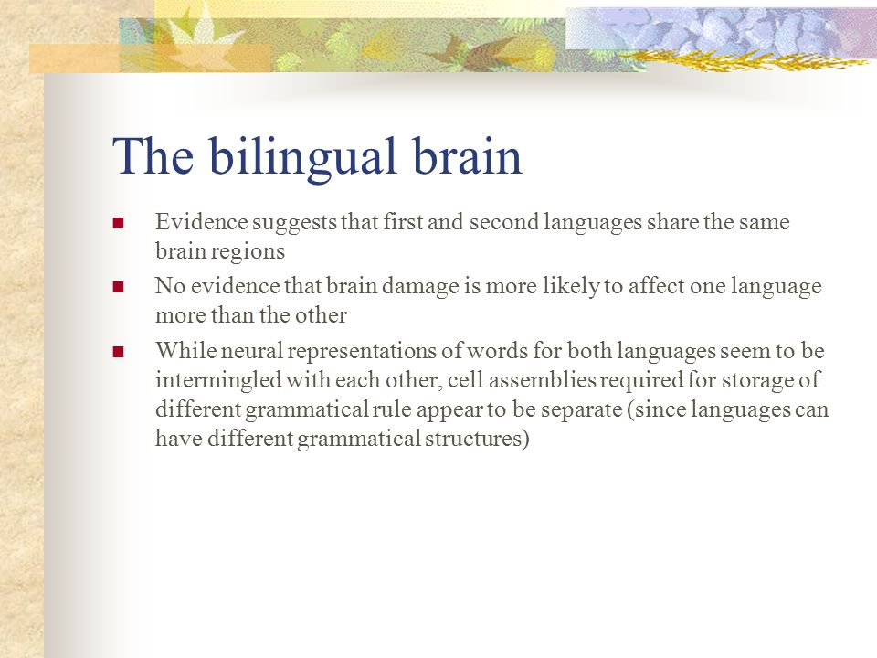 The bilingual brain Evidence suggests that first and second languages share the same brain regions.
