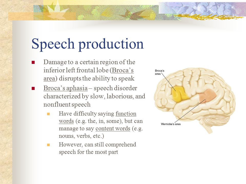 Speech production Damage to a certain region of the inferior left frontal lobe (Broca's area) disrupts the ability to speak.