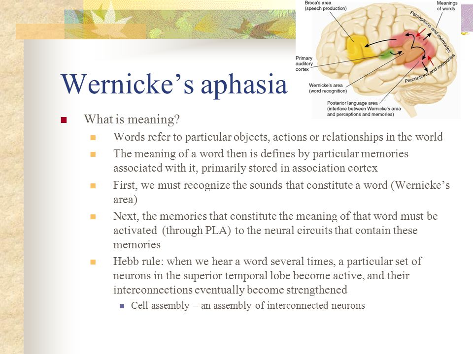 Wernicke's aphasia What is meaning