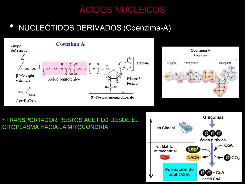 ÁCIDOS NUCLEICOS NUCLEÓTIDOS DERIVADOS (Coenzima-A)