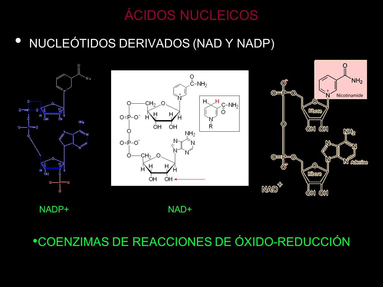 COENZIMAS DE REACCIONES DE ÓXIDO-REDUCCIÓN