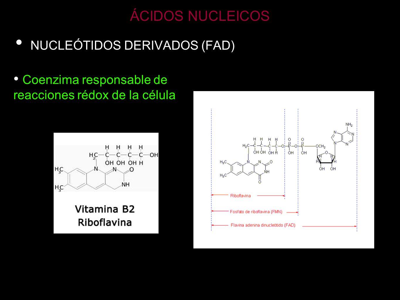 ÁCIDOS NUCLEICOS NUCLEÓTIDOS DERIVADOS (FAD)