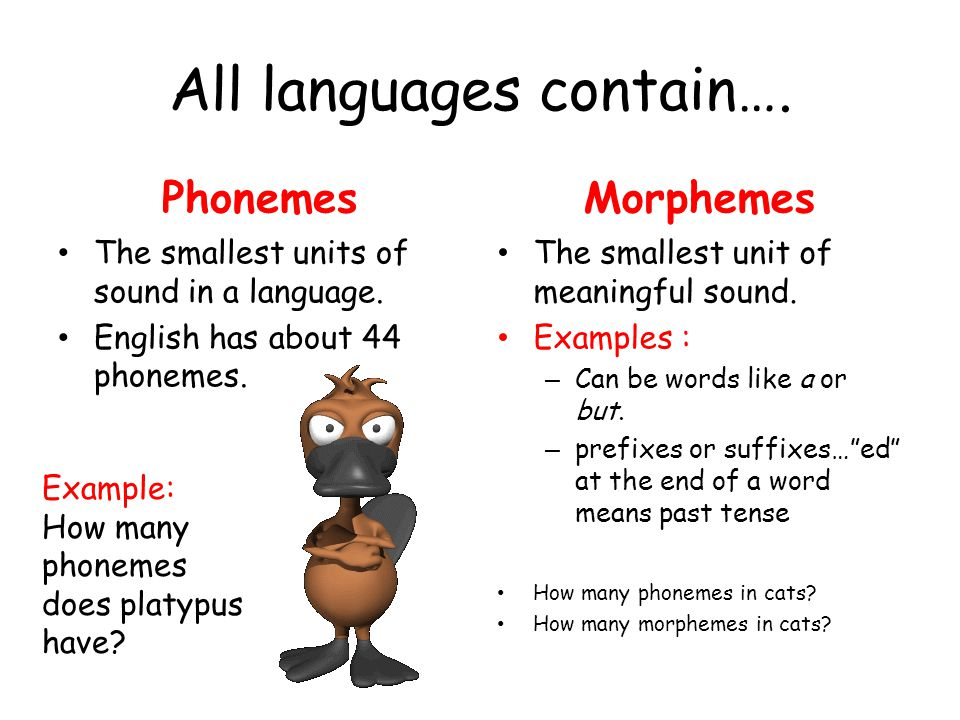 All languages contain….