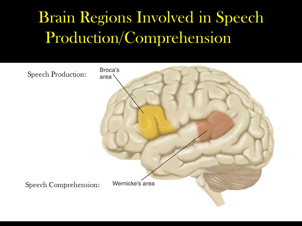 Brain Regions Involved in Speech Production/Comprehension