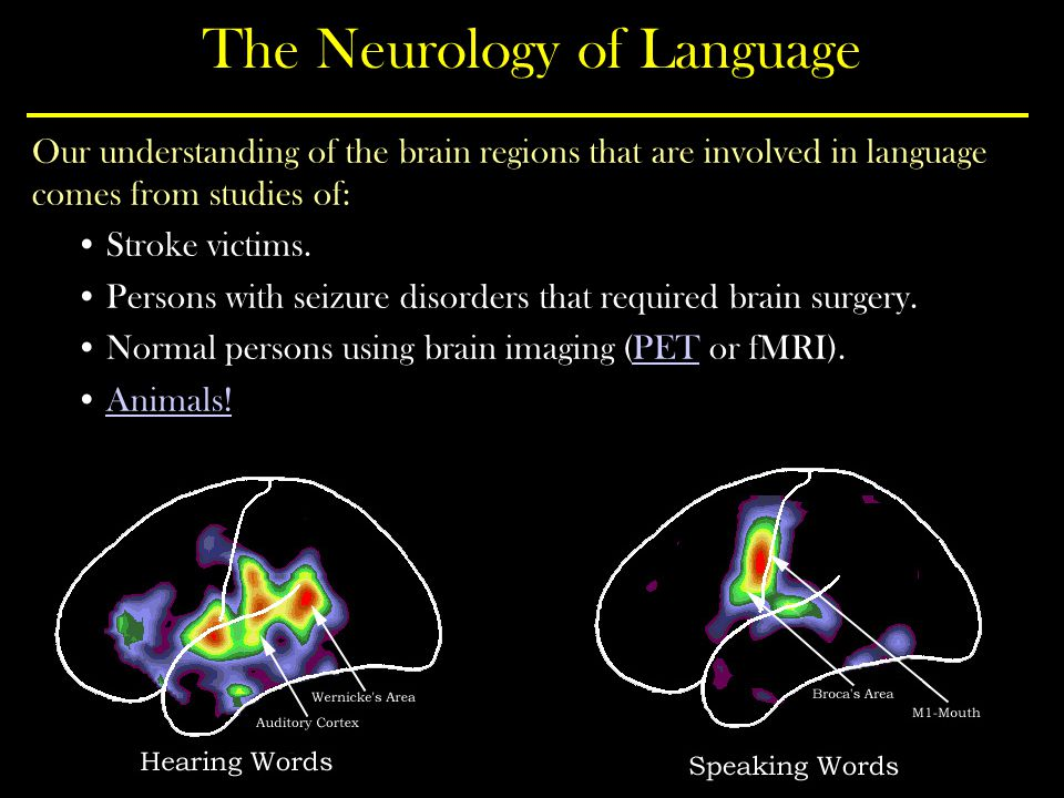 The Neurology of Language