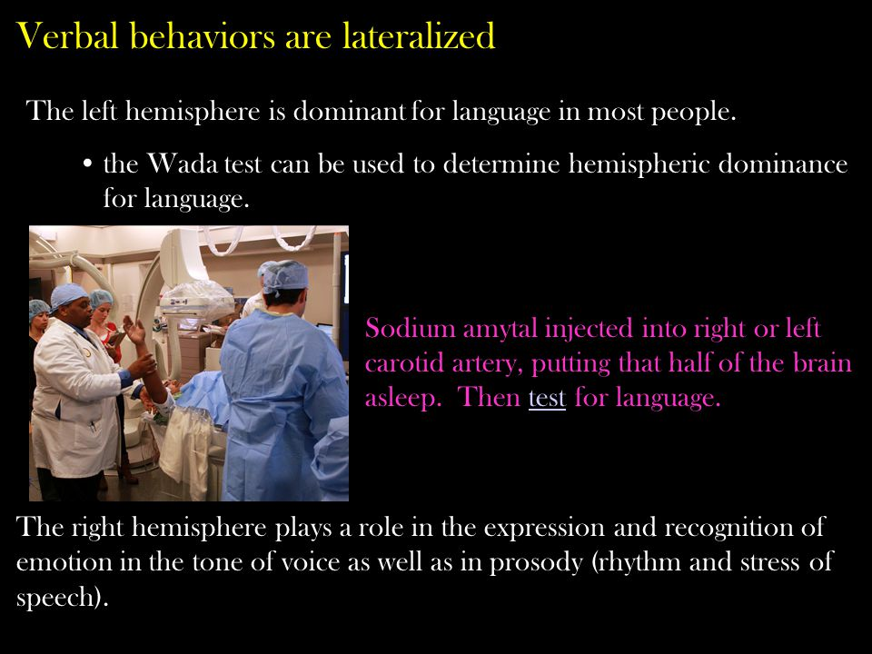 Verbal behaviors are lateralized