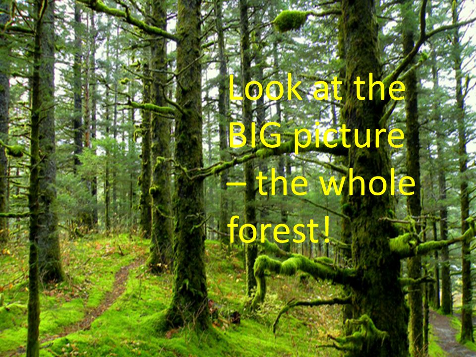 Look at the BIG picture – the whole forest!
