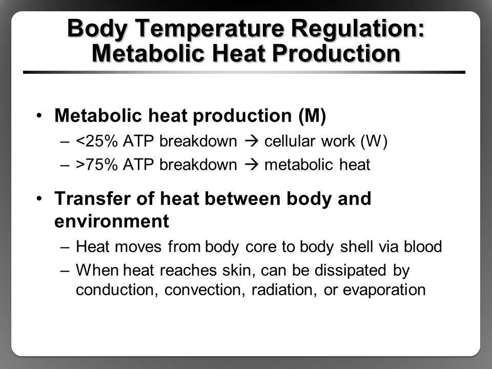 Body Temperature Regulation: Metabolic Heat Production