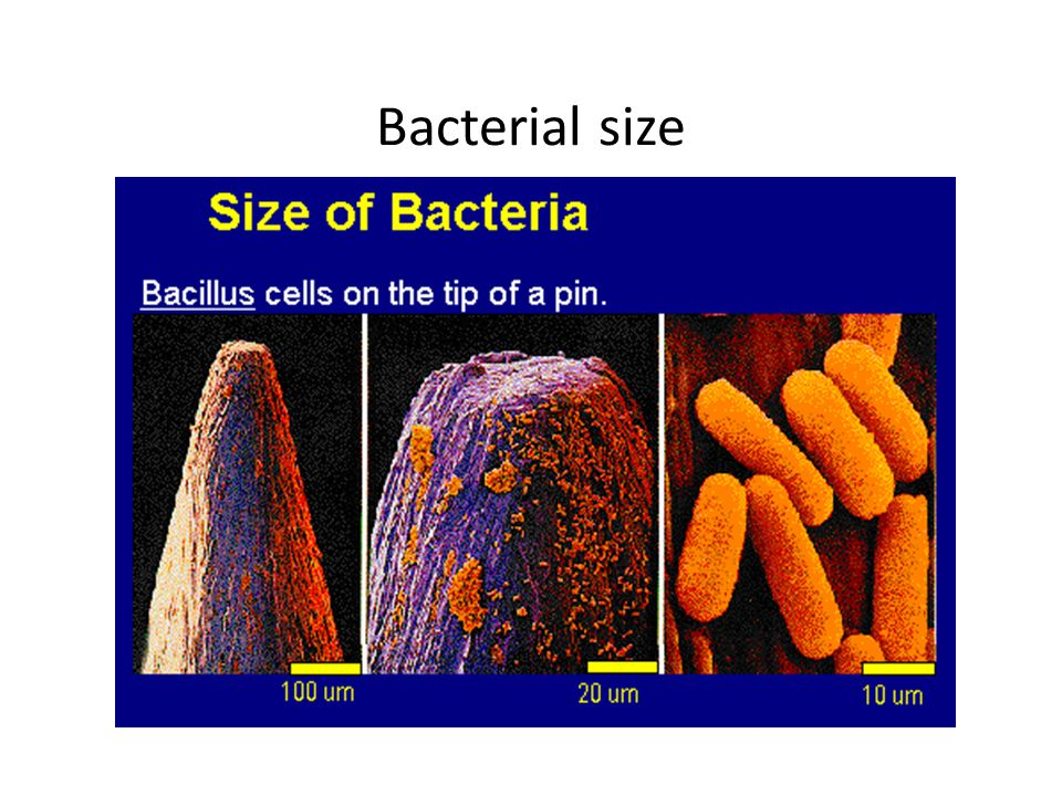 Bacterial size