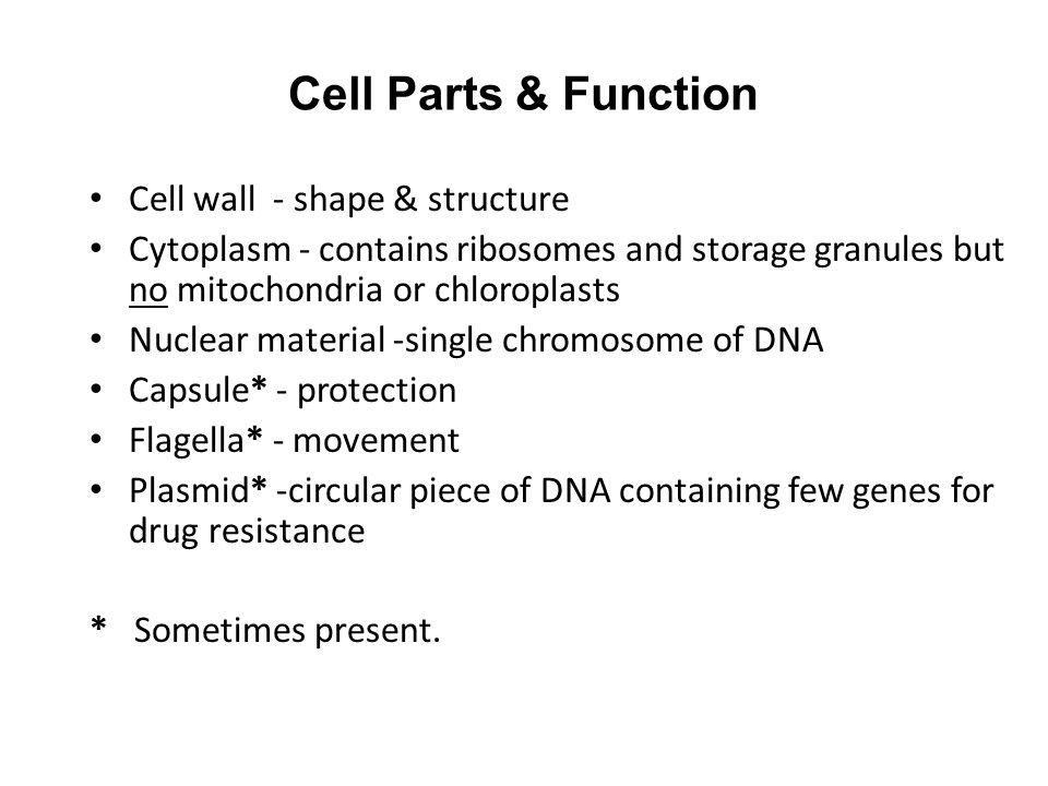 Cell Parts & Function Cell wall - shape & structure