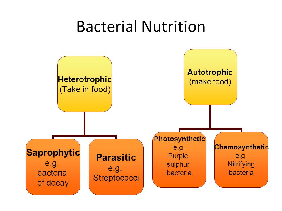 Bacterial Nutrition