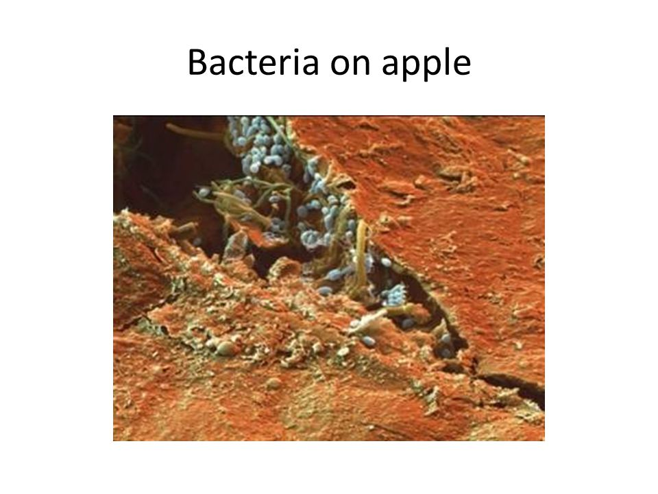 Bacteria on apple