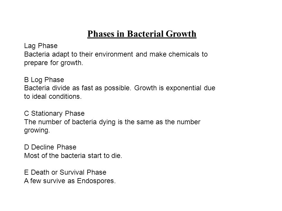 Phases in Bacterial Growth