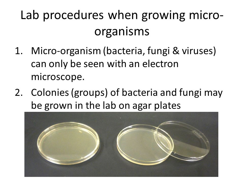 Lab procedures when growing micro-organisms