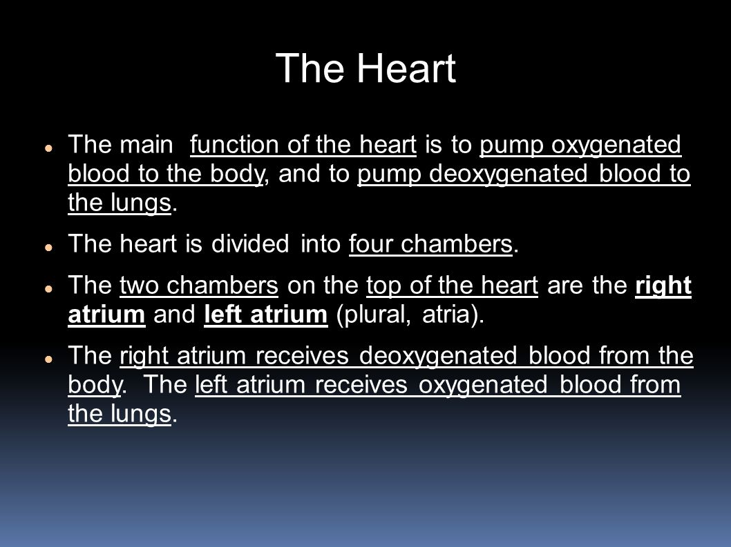 The Heart The main function of the heart is to pump oxygenated blood to the body, and to pump deoxygenated blood to the lungs.