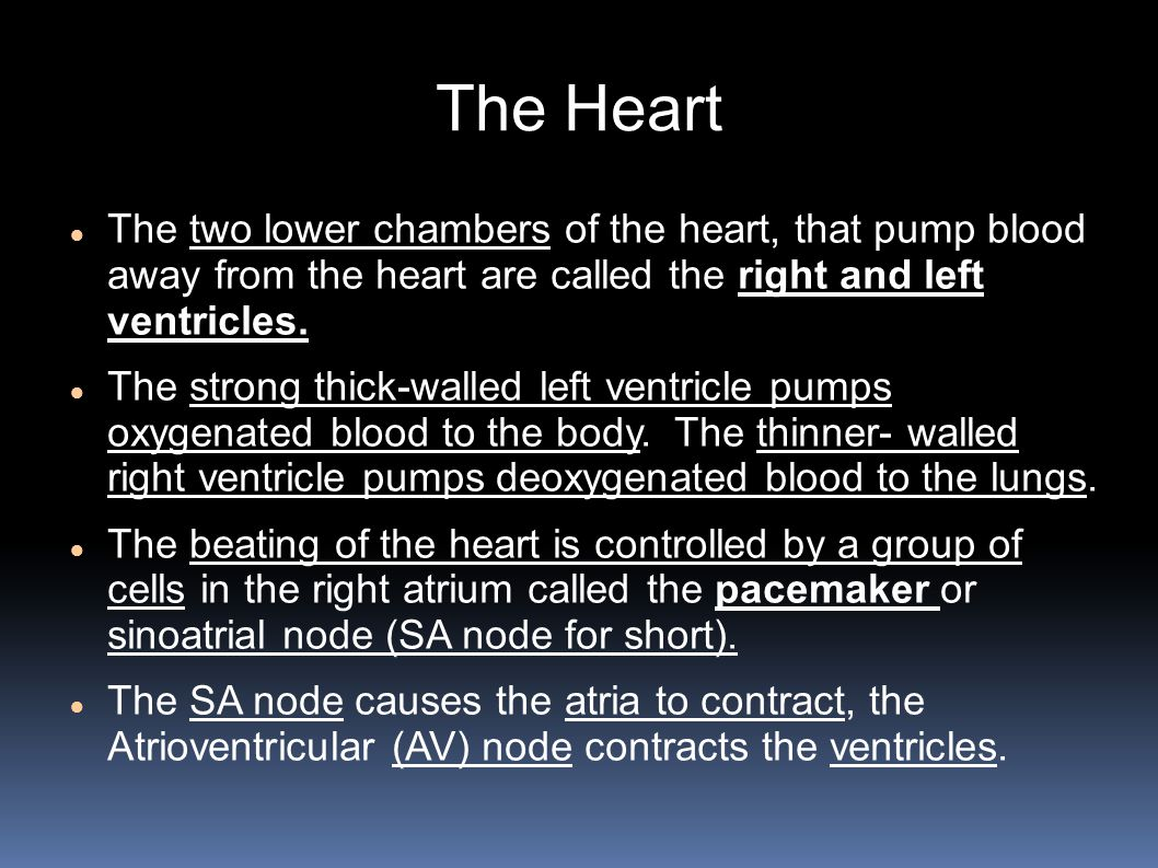 The Heart The two lower chambers of the heart, that pump blood away from the heart are called the right and left ventricles.