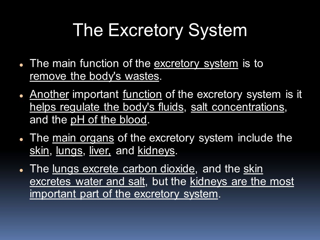 The Excretory System The main function of the excretory system is to remove the body s wastes.
