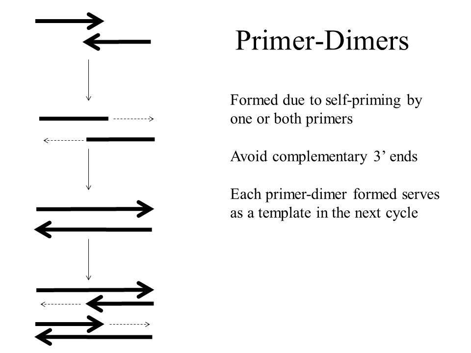 Primer-Dimers Formed due to self-priming by one or both primers