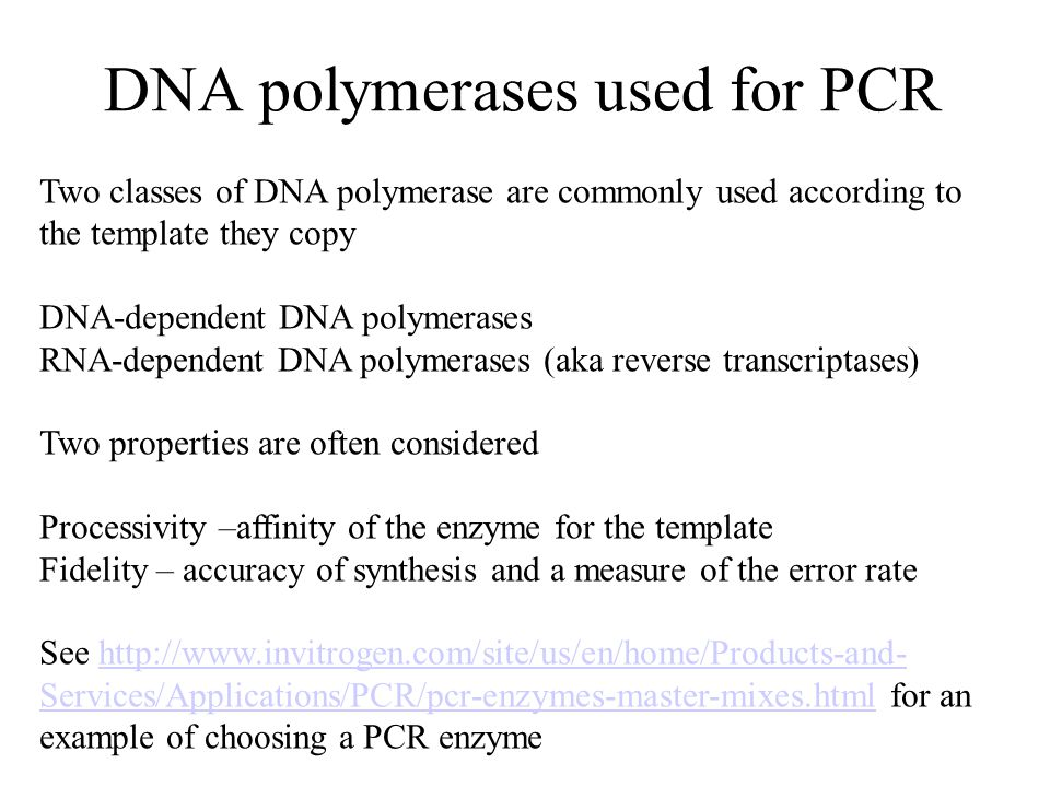 DNA polymerases used for PCR