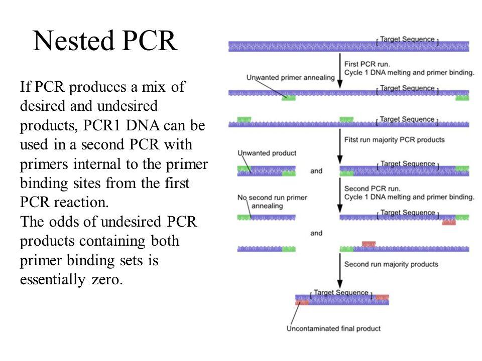 Nested PCR