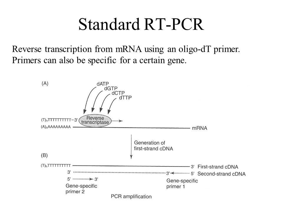 Standard RT-PCR Reverse transcription from mRNA using an oligo-dT primer.