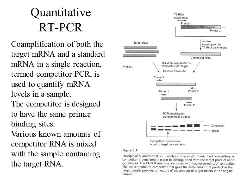 Quantitative RT-PCR