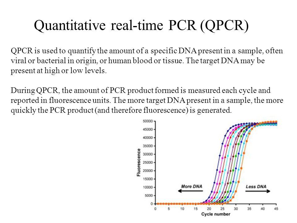 Quantitative real-time PCR (QPCR)