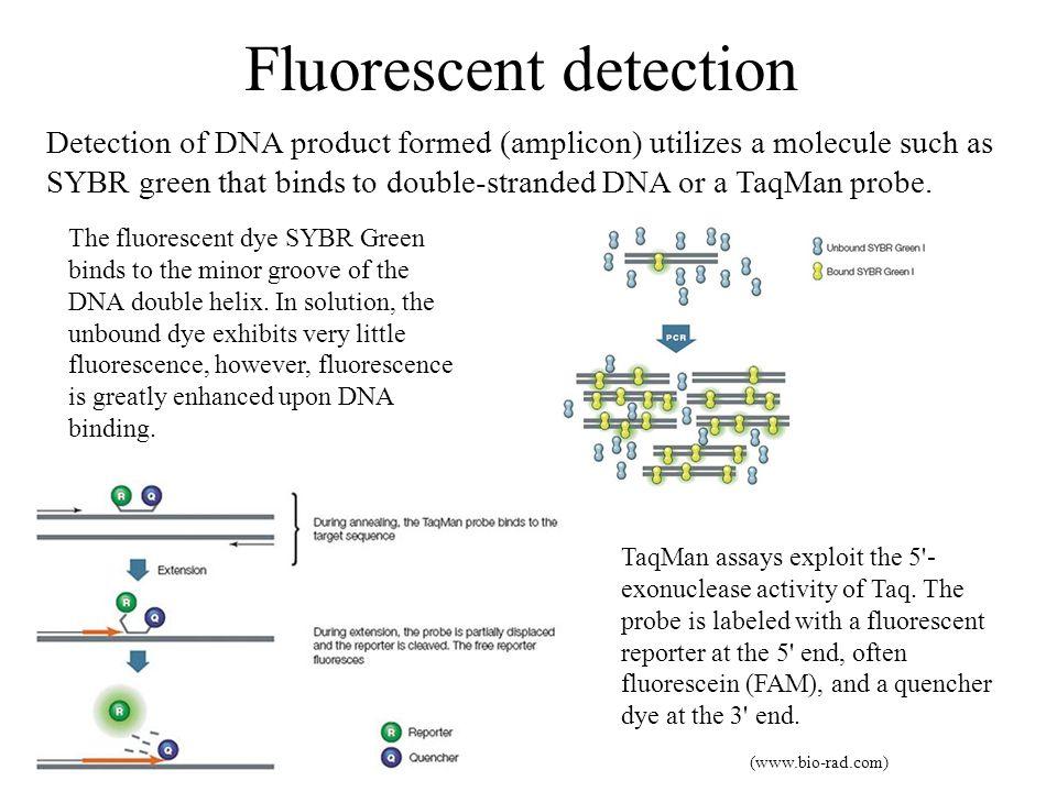 Fluorescent detection