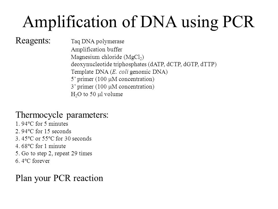 Amplification of DNA using PCR