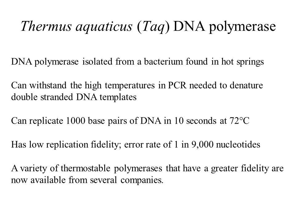 Thermus aquaticus (Taq) DNA polymerase