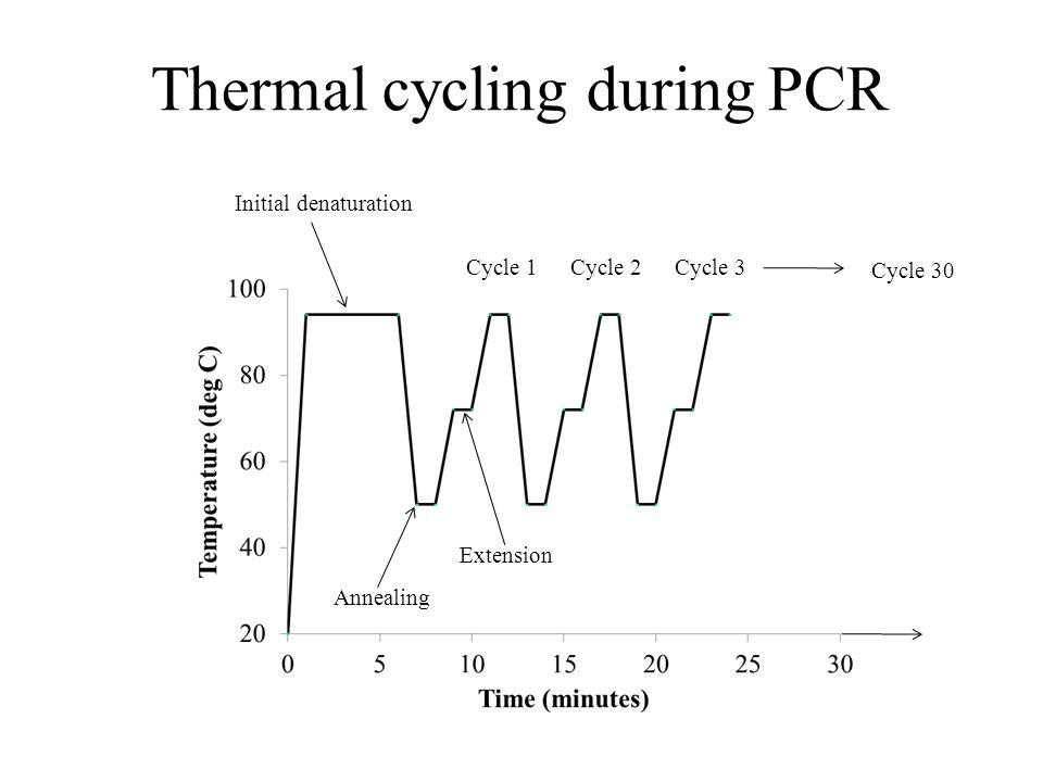 Thermal cycling during PCR