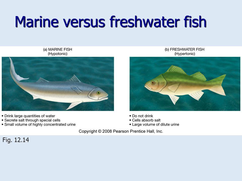 Marine versus freshwater fish