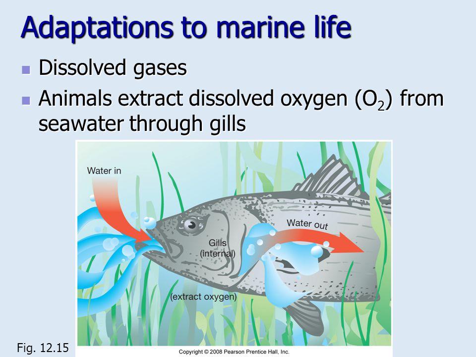 Adaptations to marine life