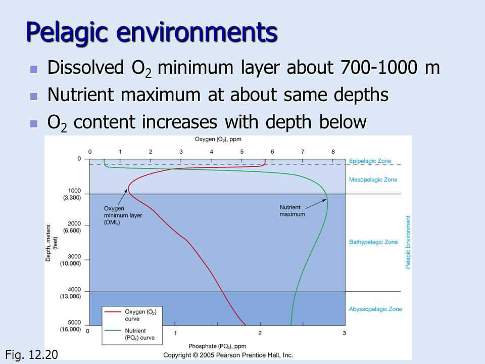 Pelagic environments Dissolved O2 minimum layer about 700-1000 m