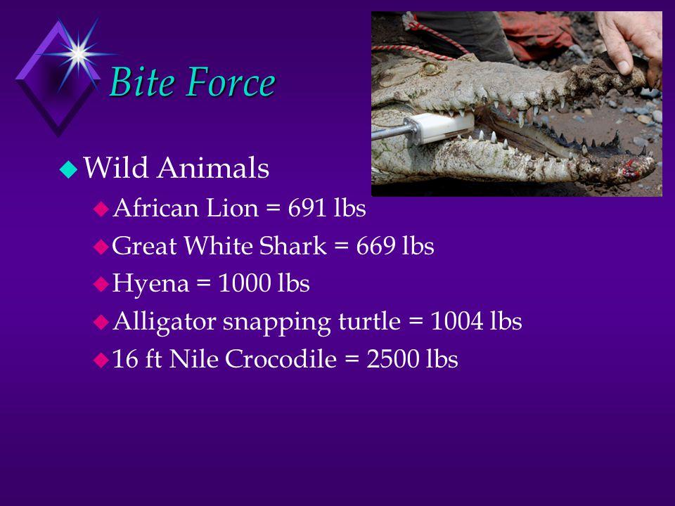 Bite Force Wild Animals African Lion = 691 lbs