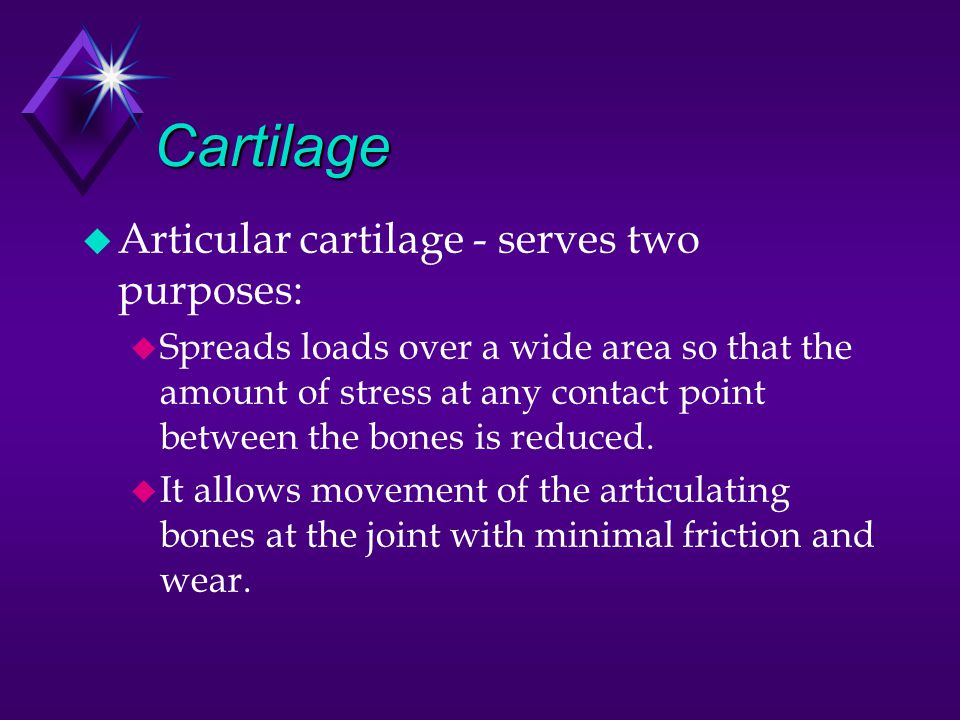 Cartilage Articular cartilage - serves two purposes: