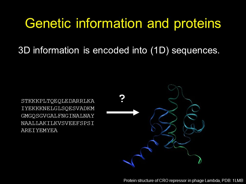 Genetic information and proteins