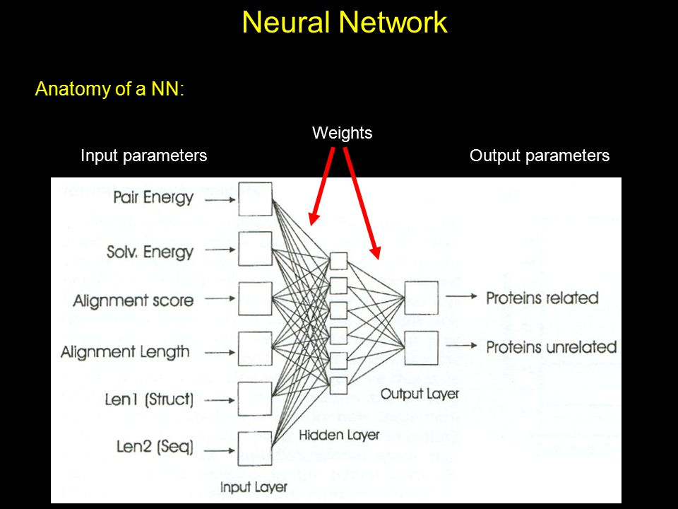Neural Network Anatomy of a NN: Weights Input parameters