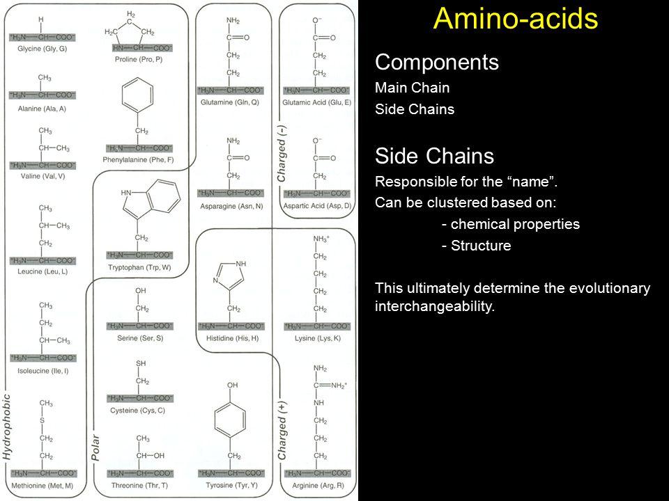 Amino-acids Components Main Chain Side Chains