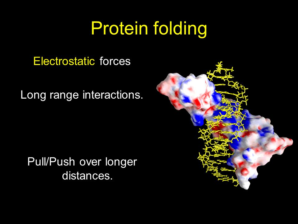 Protein folding Electrostatic forces Long range interactions.