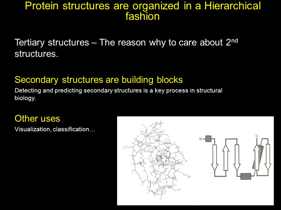 Protein structures are organized in a Hierarchical fashion