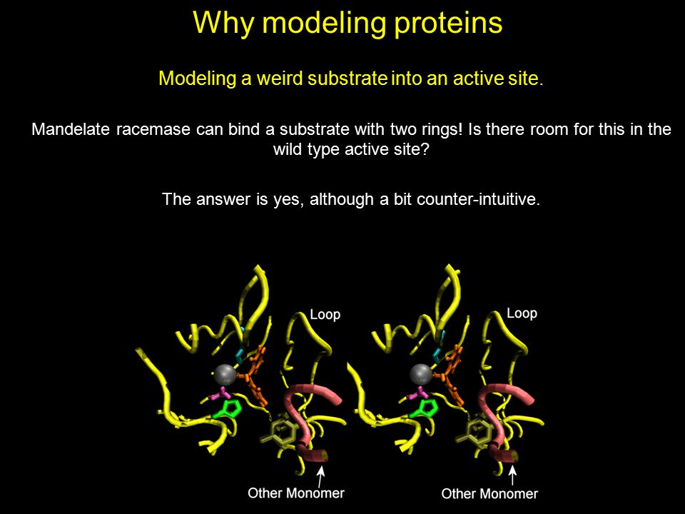 Why modeling proteins Modeling a weird substrate into an active site.