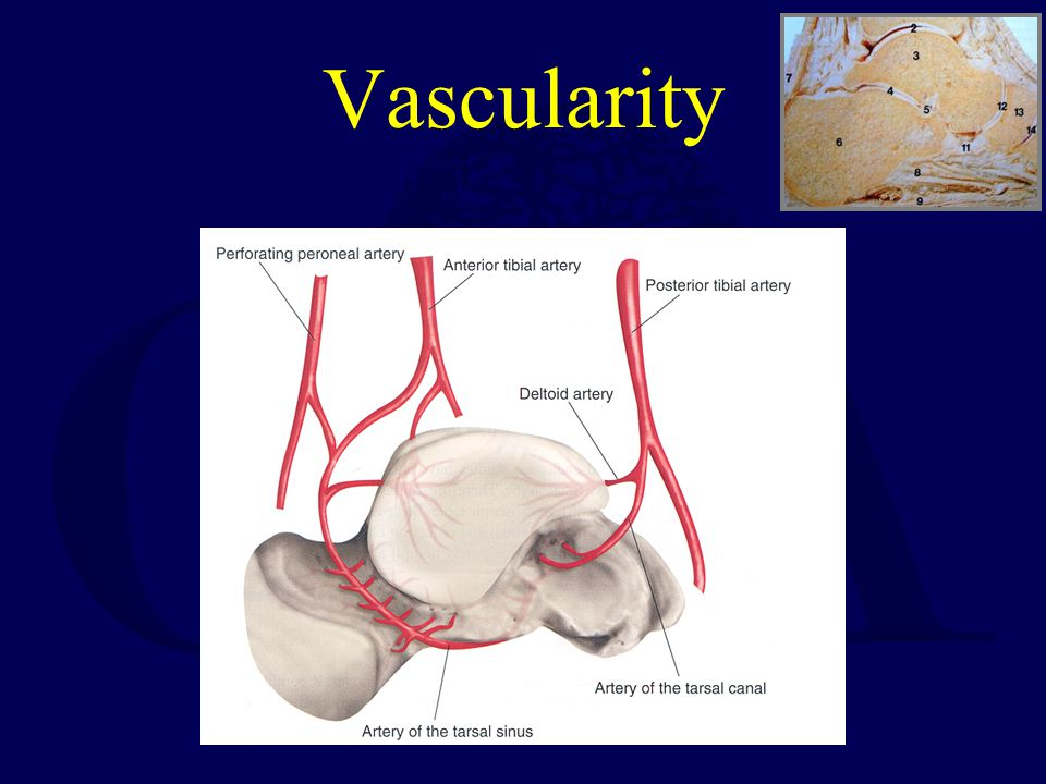 Vascularity Talus ORIF Technique