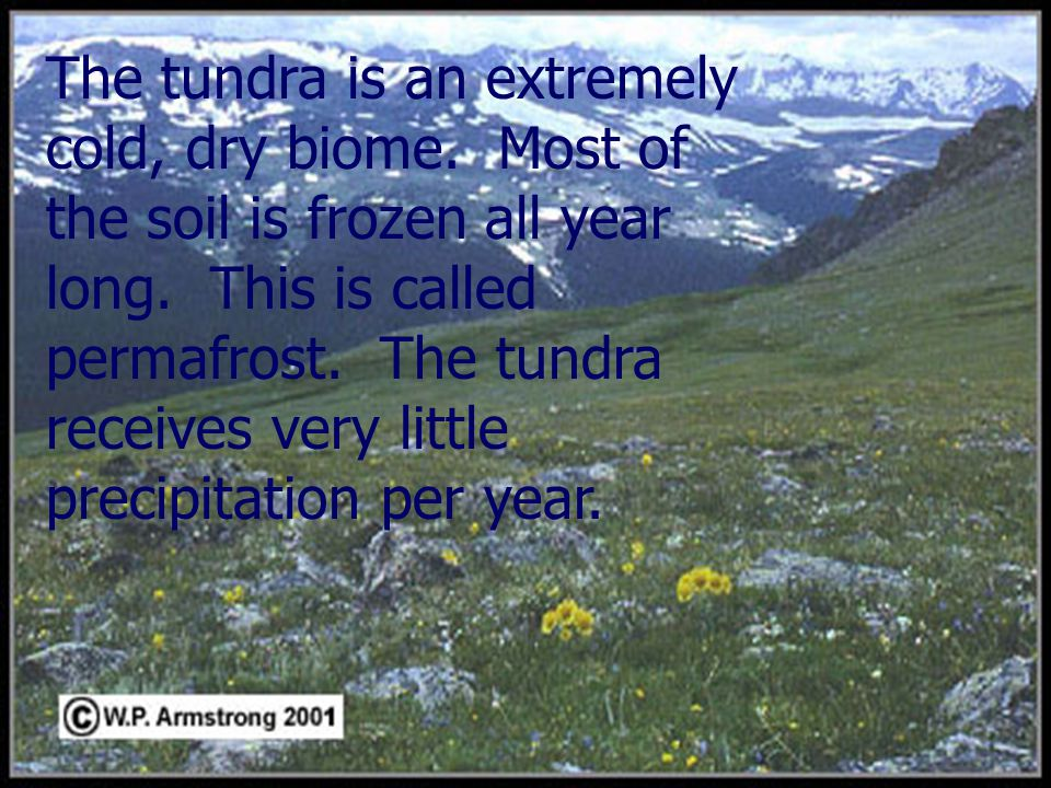 The tundra is an extremely cold, dry biome