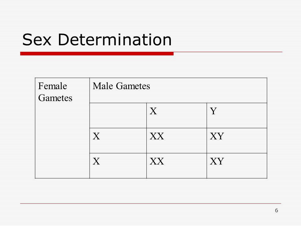 Sex Determination Female Gametes Male Gametes X Y XX XY