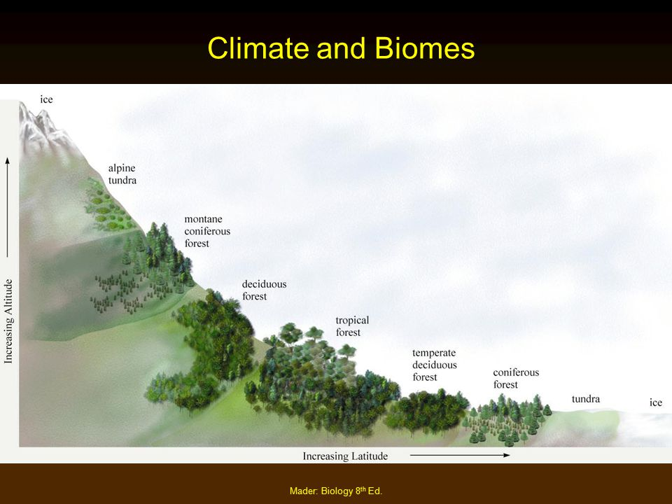 Climate and Biomes Mader: Biology 8th Ed.